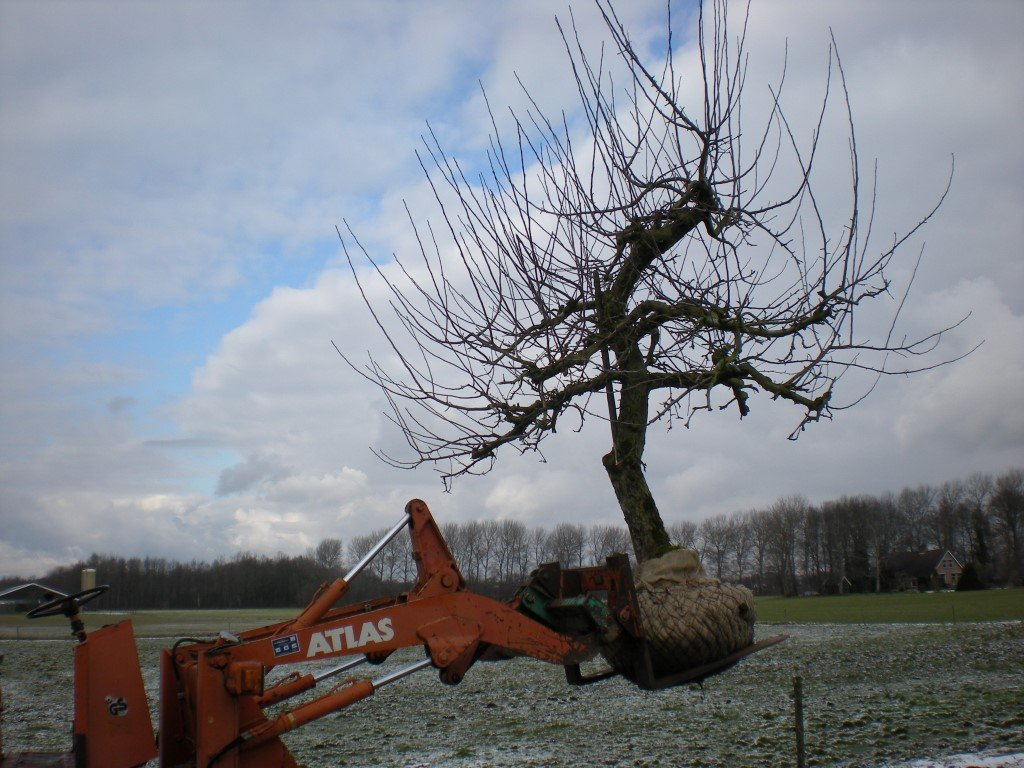 Appelboom Rode Boskoop (4)