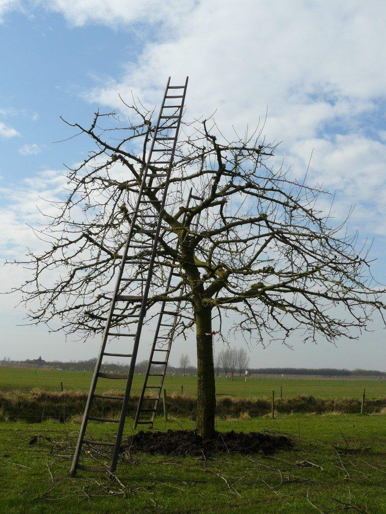 Hoogstam Appelboom Jonagold (2)