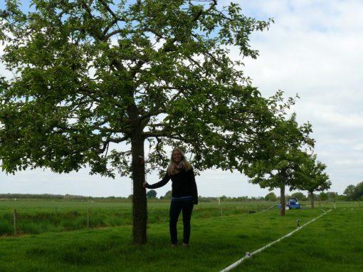 Hoogstam appelboom Jonagold