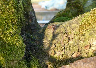 Perenbomen snoeien